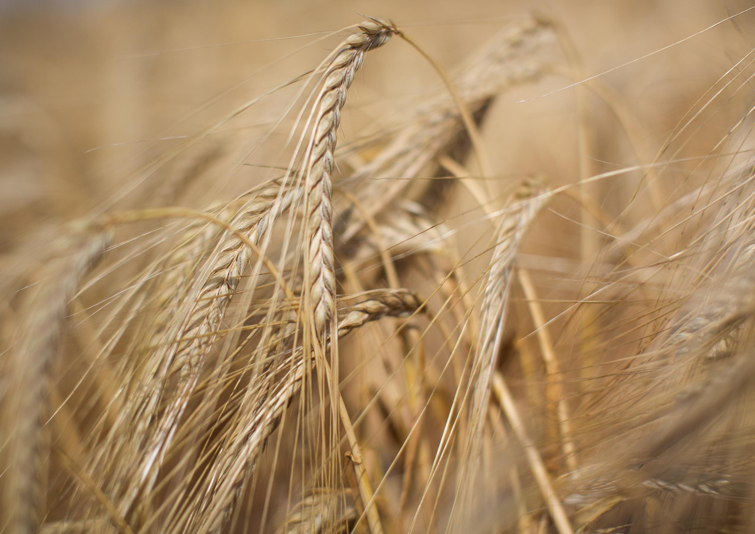 Landscape1_Wheat_Bolger_Photography.jpg