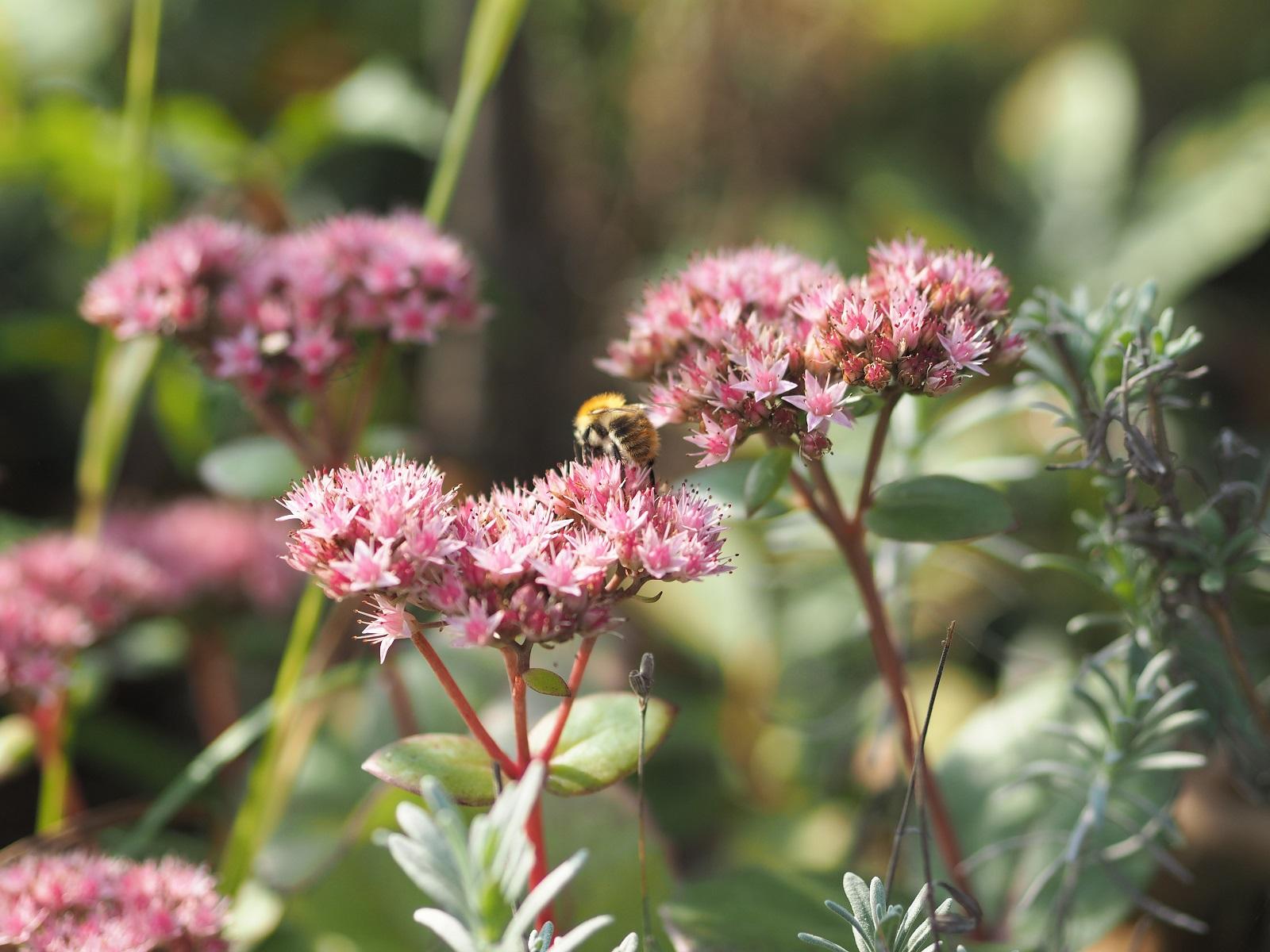 Biene Blume.jpg