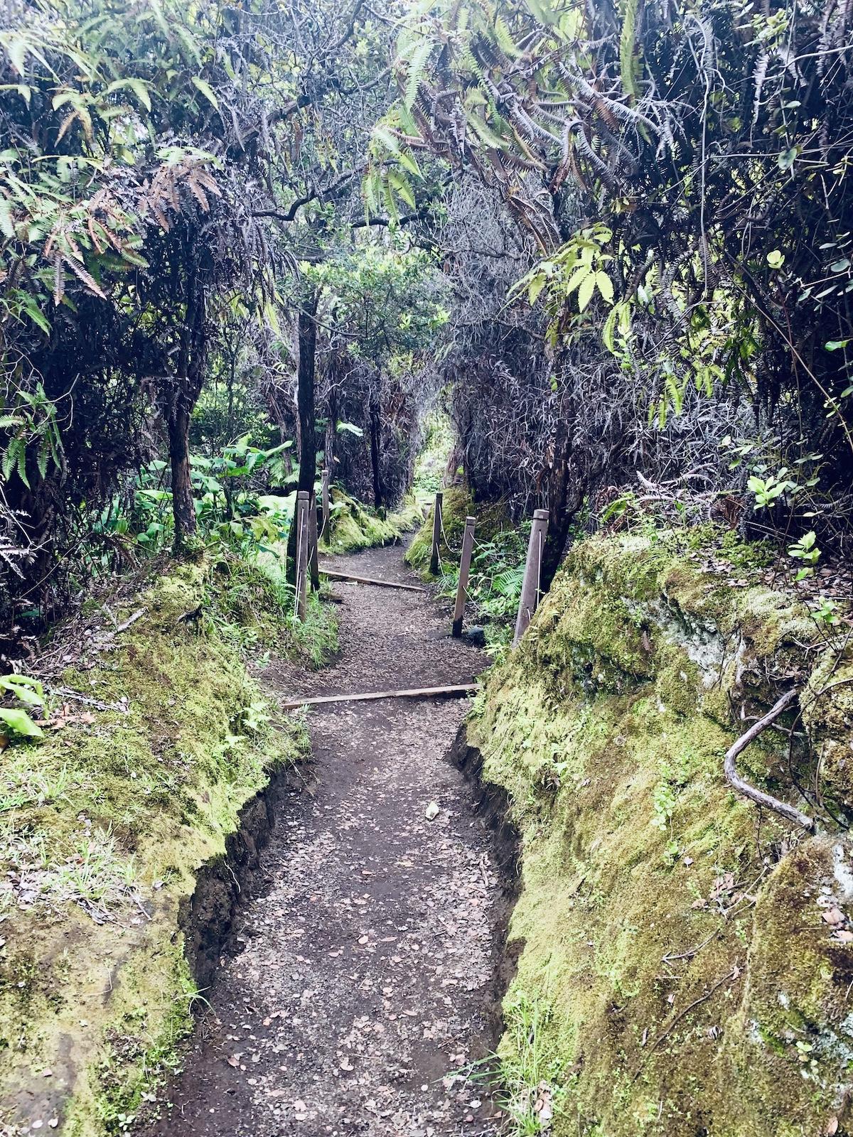 Kilauea Caldera Tropical Forest Walk