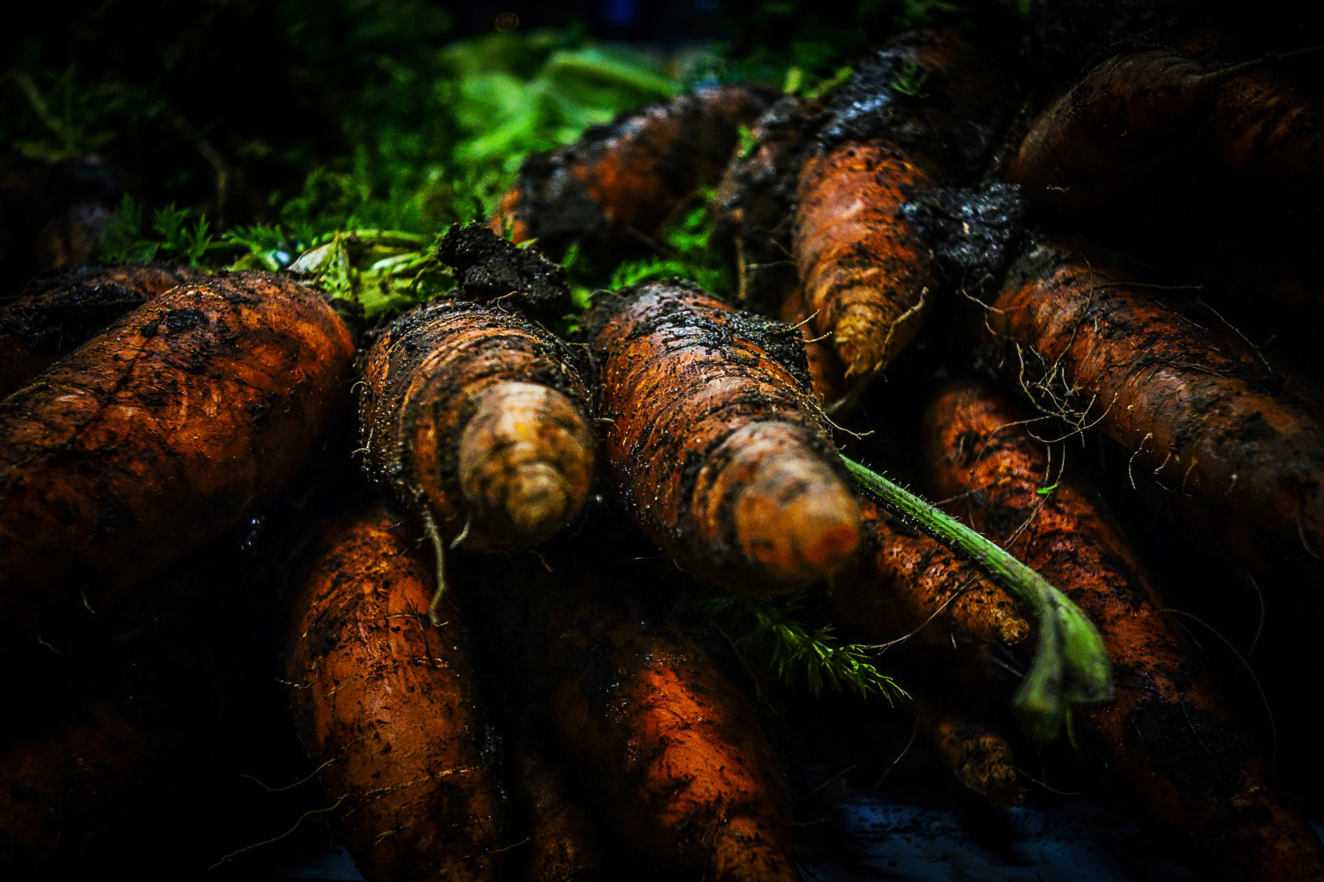 Carrots-unearthed.jpg