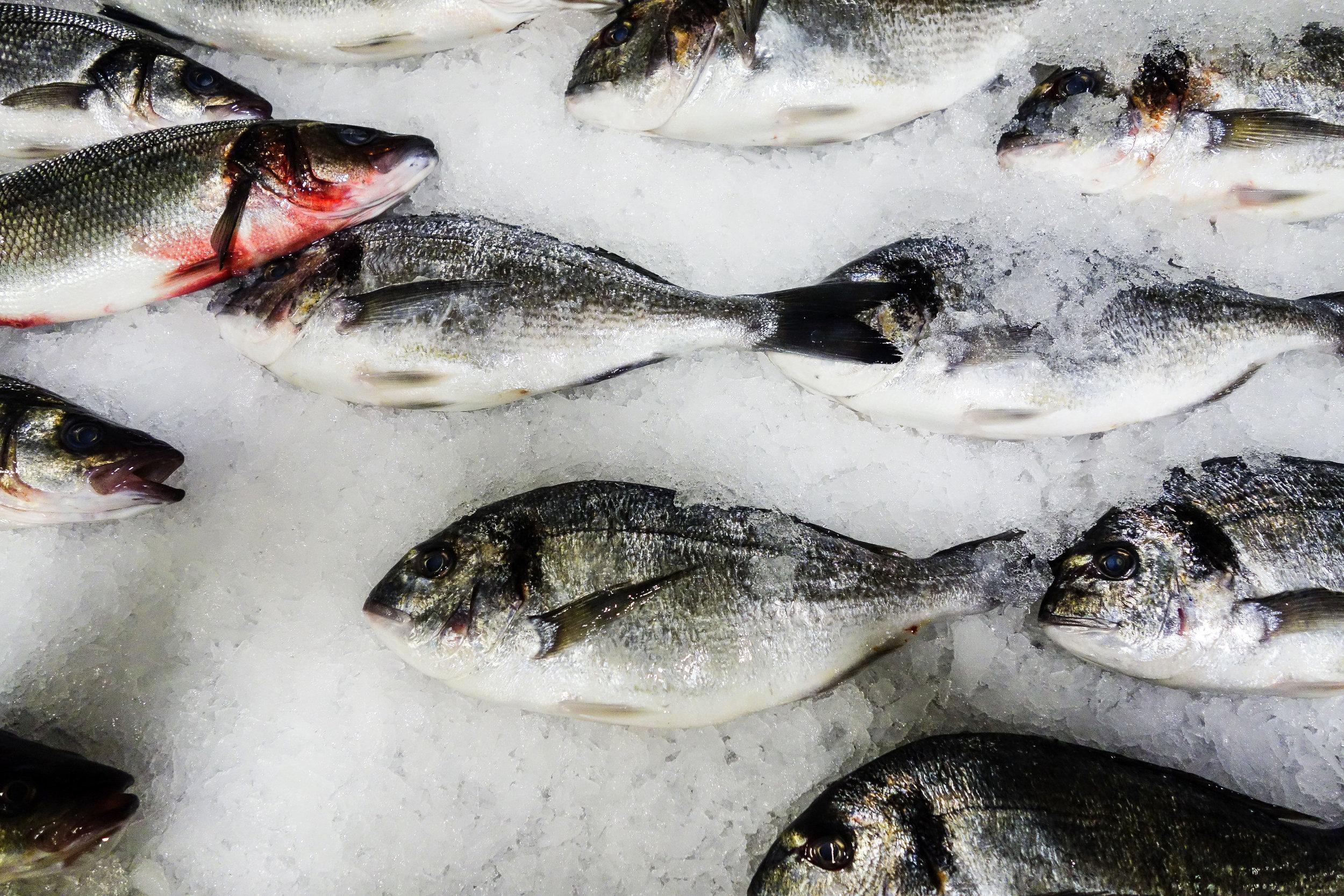 Friday-fish-market.jpg