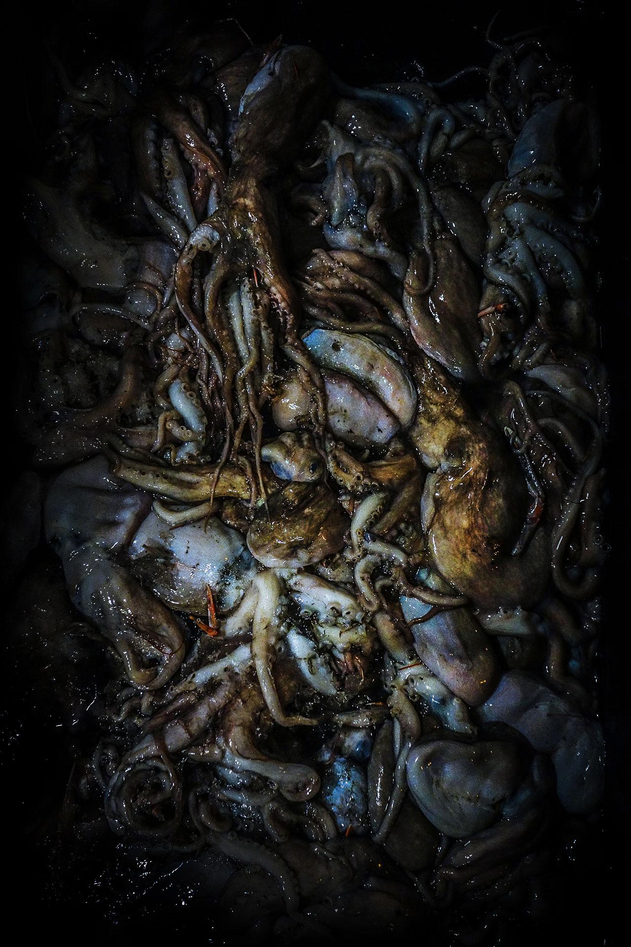Octopus-at-market.jpg