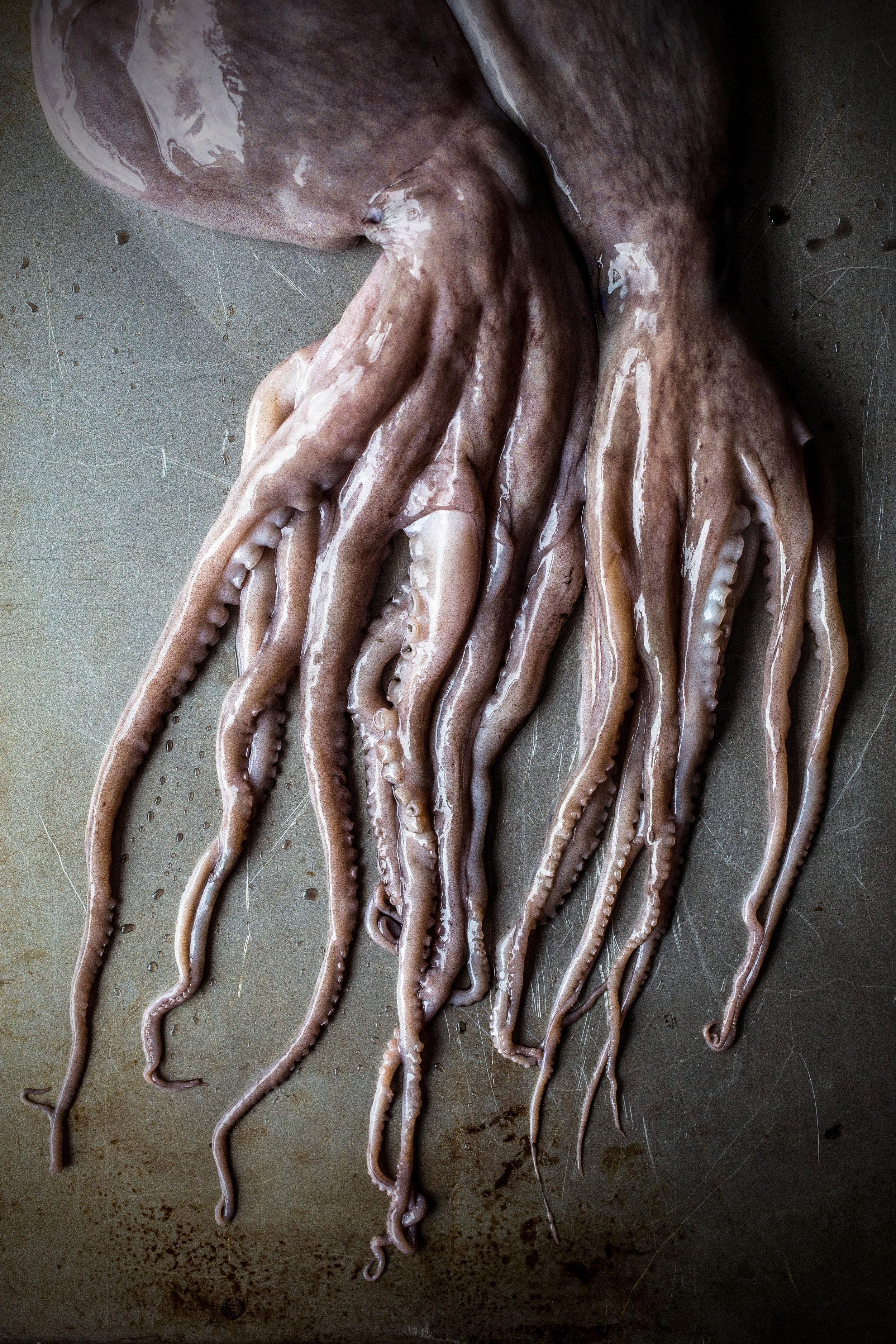 Octopus-bodies.jpg