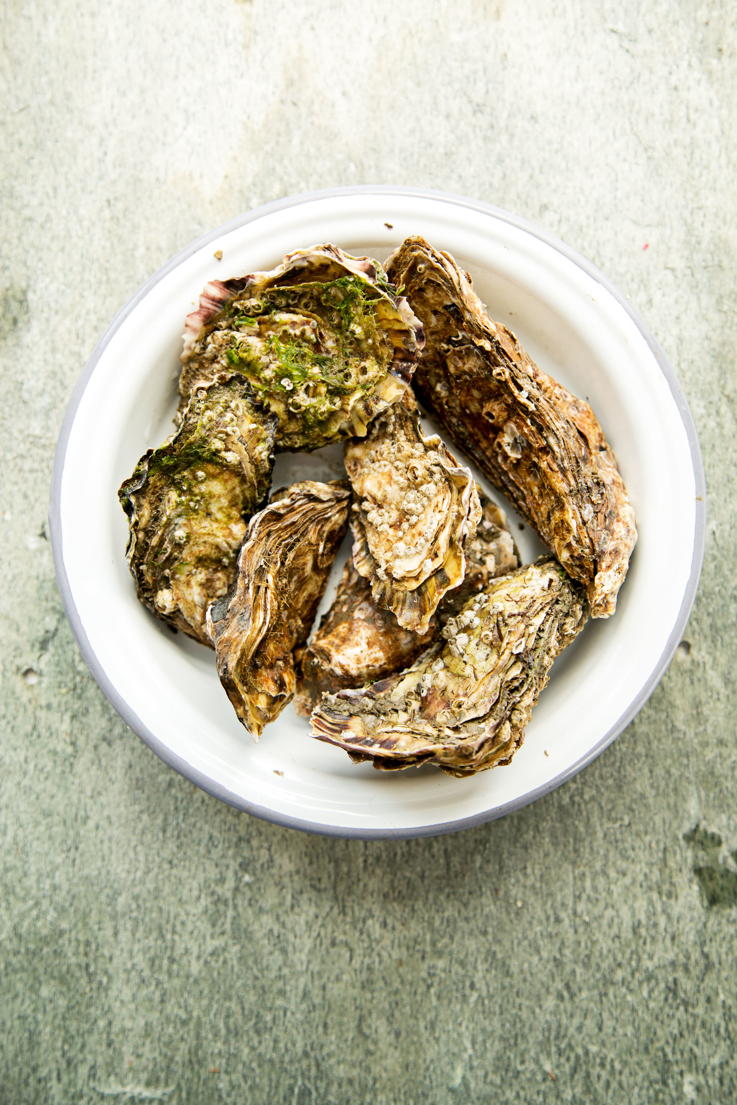 Carlingford-oysters-in-a-bowl.jpg