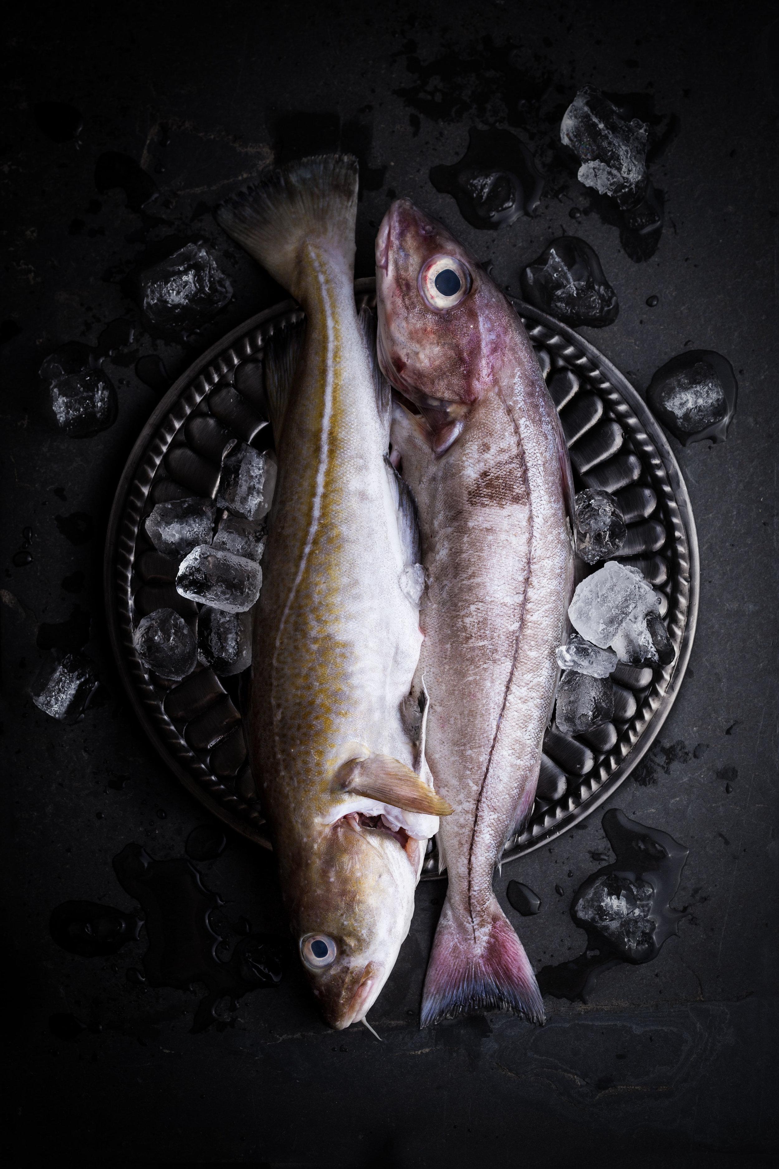 Fishy-dish--1.jpg