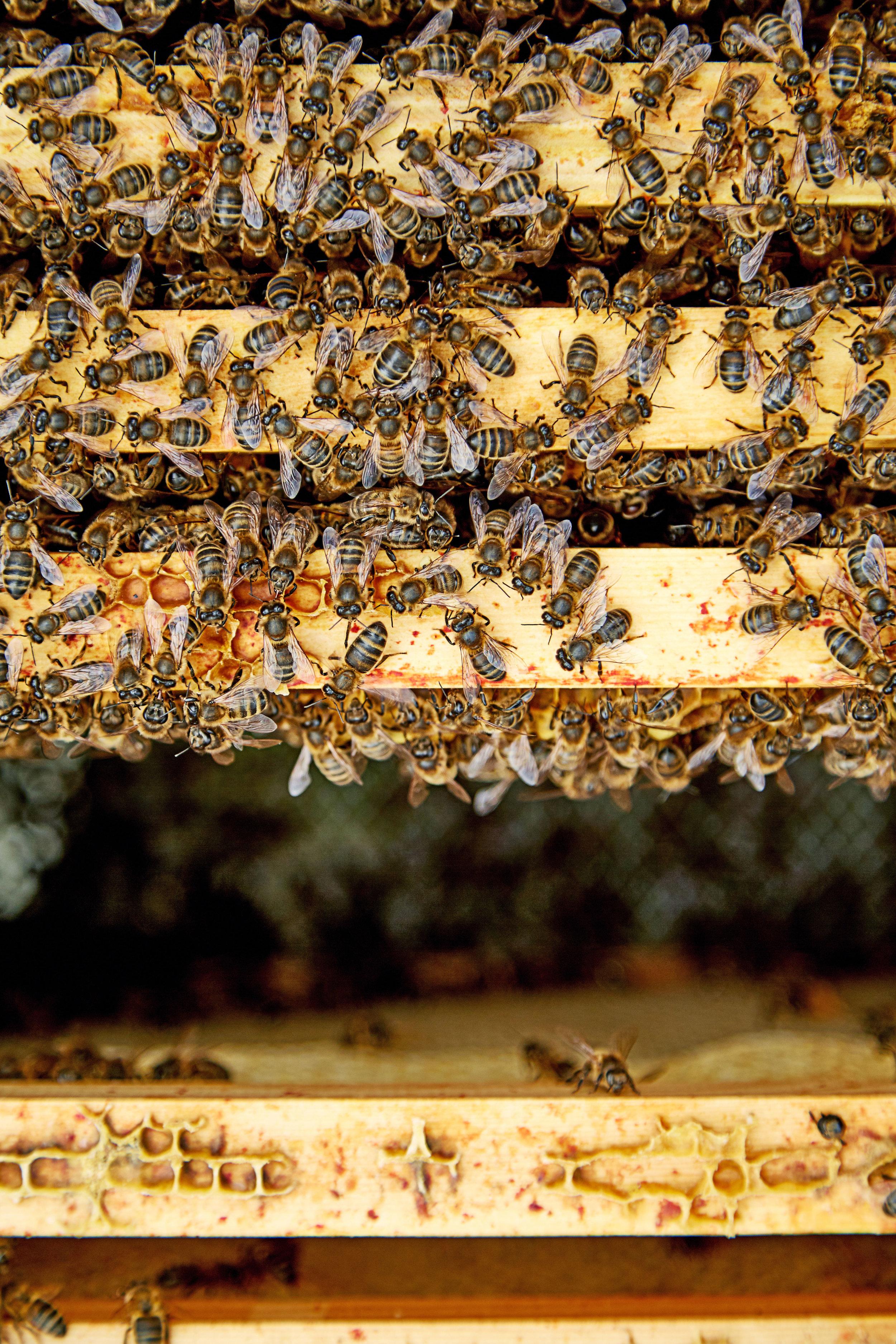 Bee-hive-overhead.jpg