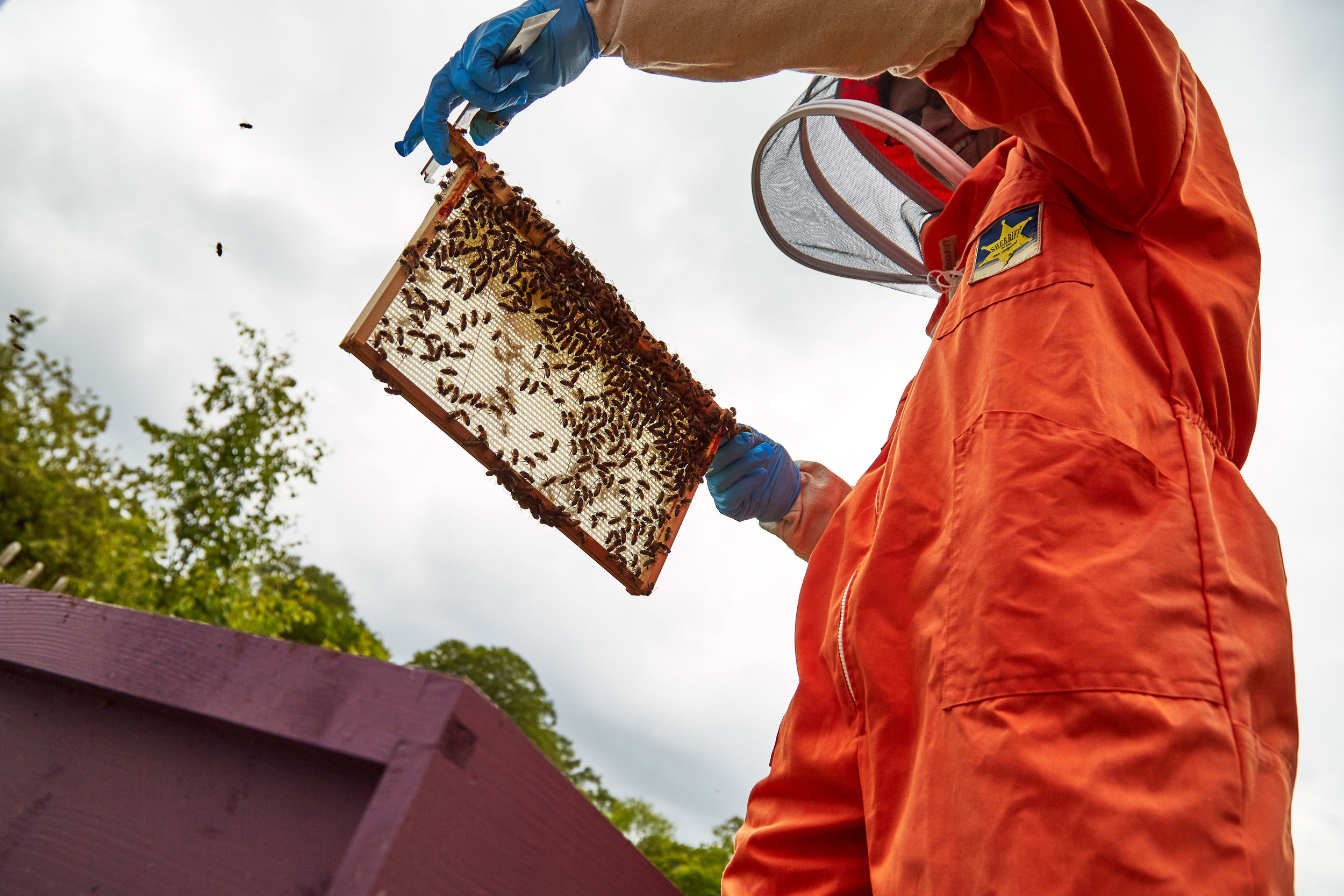 Bee-Keeping435May-19-2019.jpg