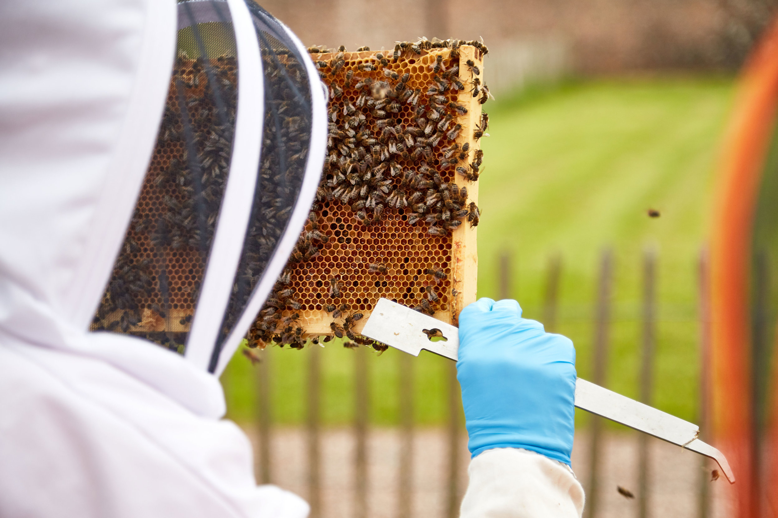 Bee-Keeping600May-19-2019.jpg