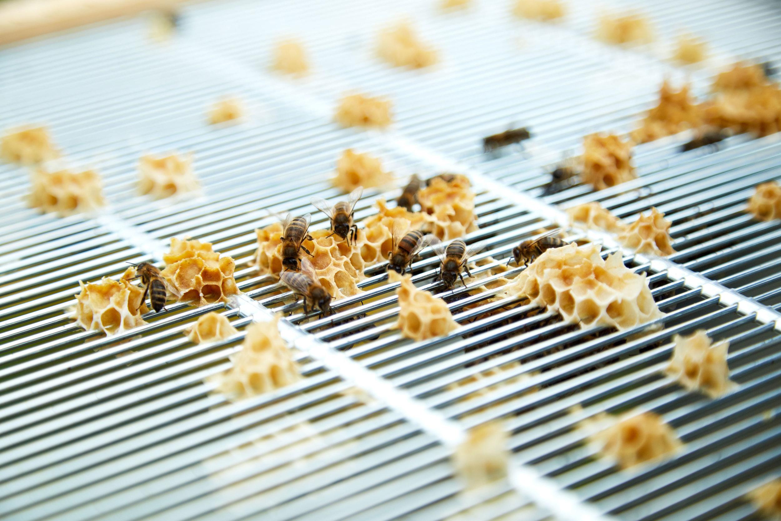 Bee-Keeping684May-19-2019.jpg