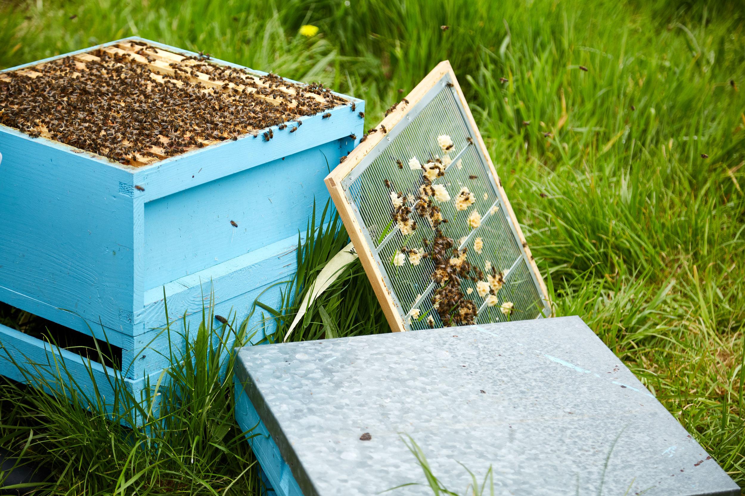Bee-Keeping673May-19-2019.jpg