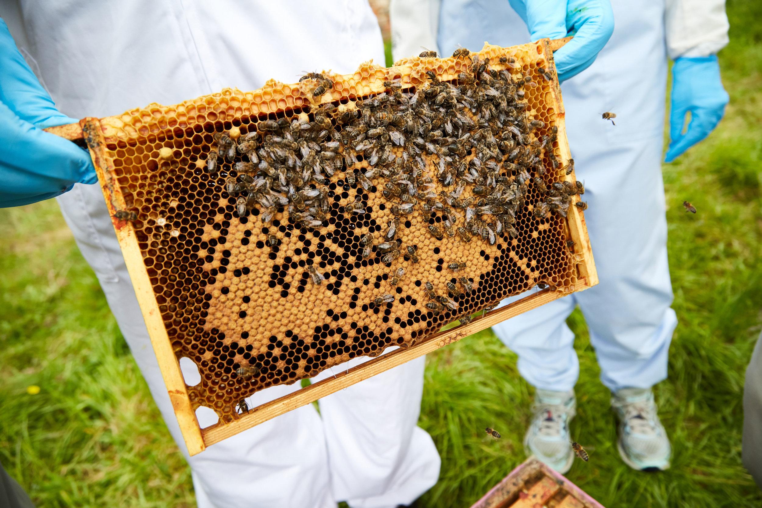 Bee-Keeping574May-19-2019.jpg