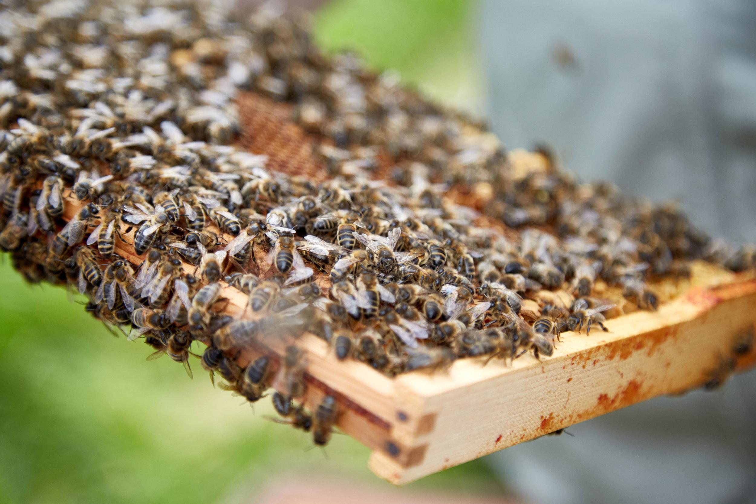 Bee-Keeping082May-19-2019.jpg