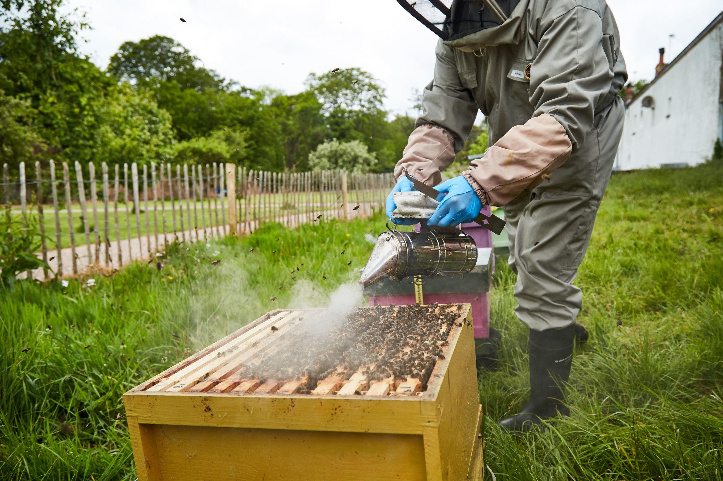 Bee-Keeping073May-19-2019.jpg