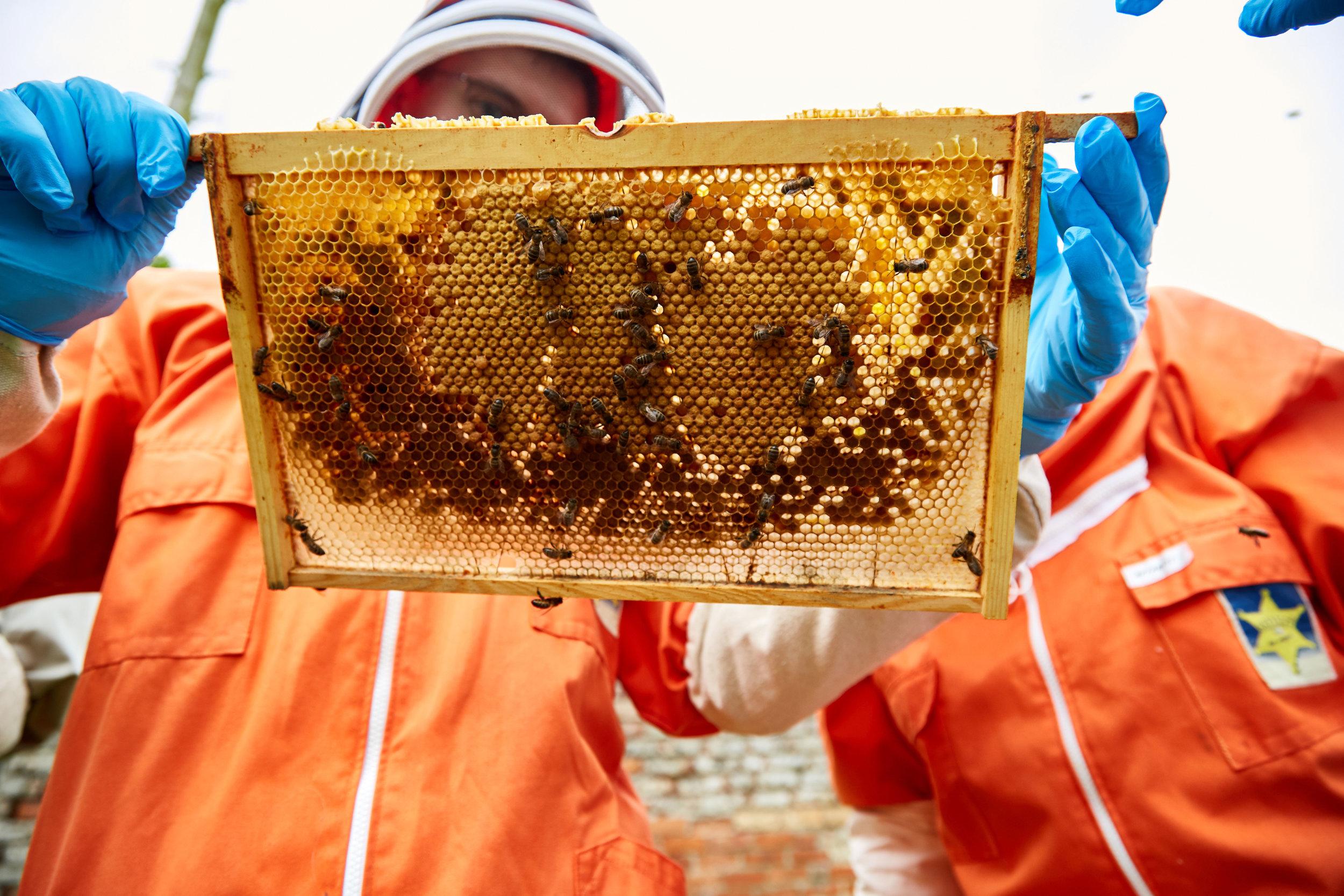 Bee-Keeping101May-19-2019.jpg