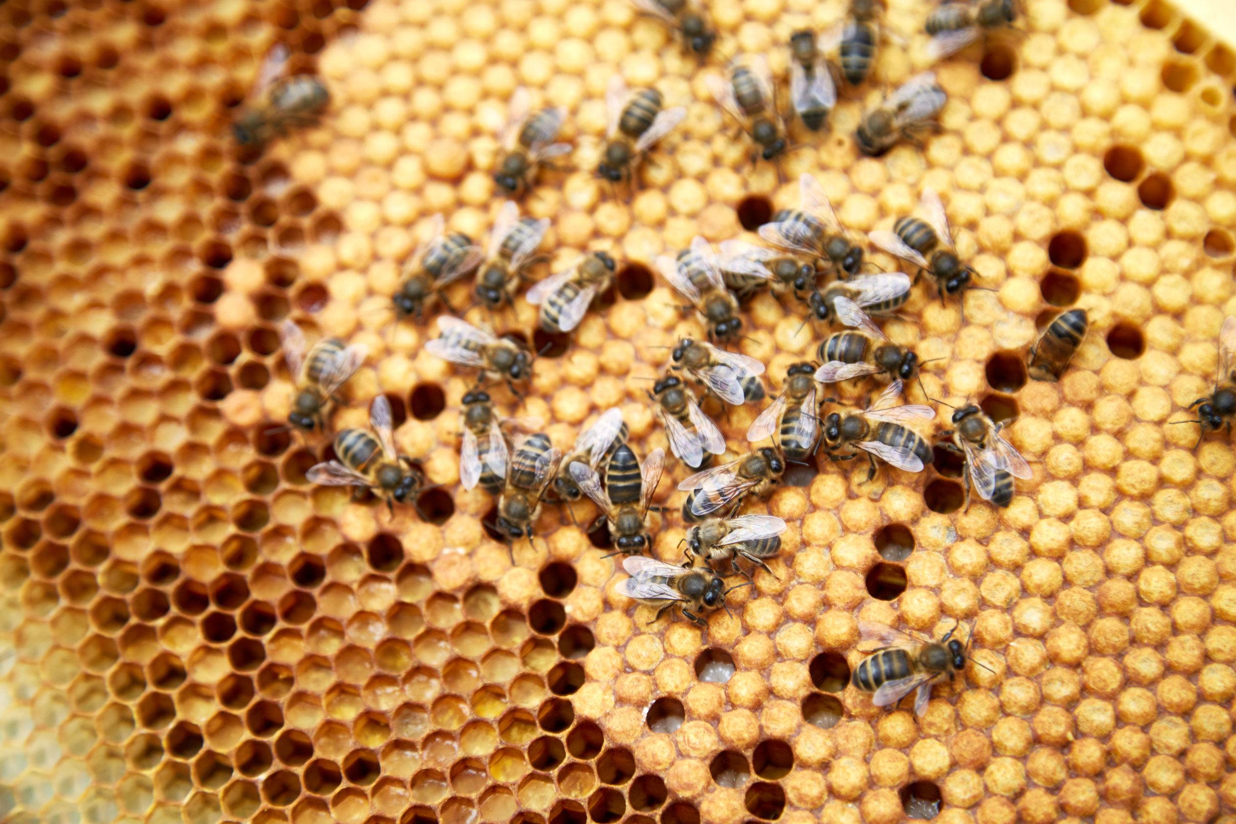 Bee-Keeping116May-19-2019.jpg