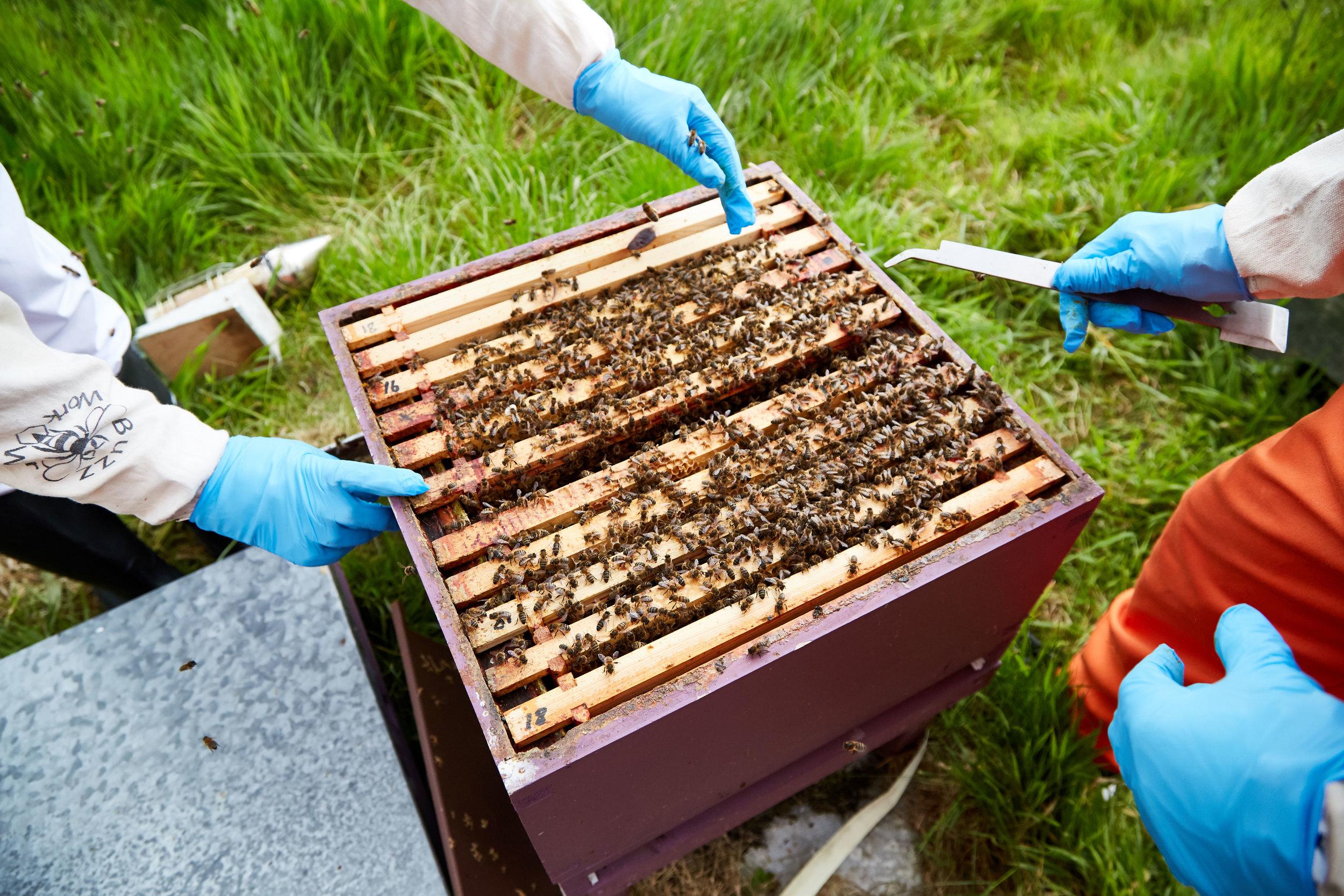 Bee-Keeping345May-19-2019.jpg