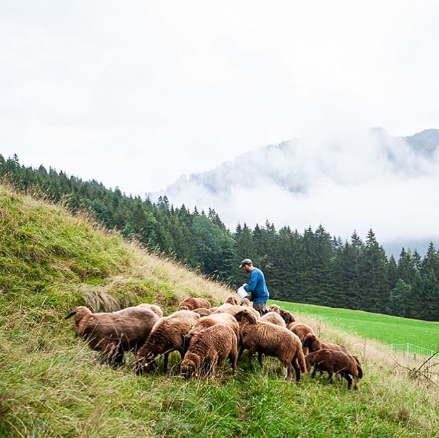With our host we went up to visit these beauties 🐑 #alps #ammergaueralpen #countthesheep #mountains #landschaftsfotografie #photography