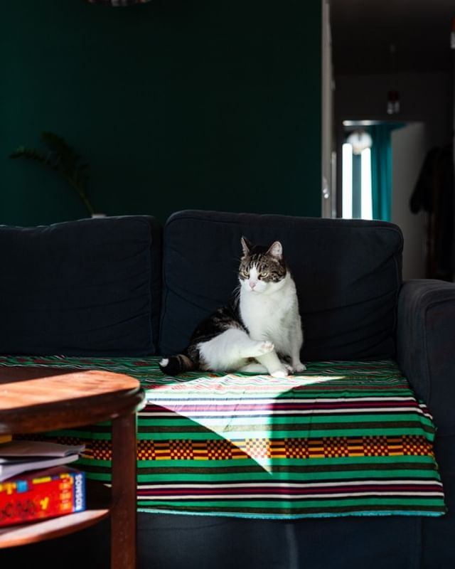 Who's the boss? 😼 (the thing nobody asks at home since the answer is evident) #catsofinstagram #tamagram #catboss #homedecor #greenwall #photography #lightandshadow