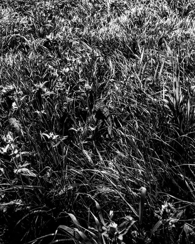 Grass was greener  #alpen #mountains #nature #landscape#summer #schwarzweissfotografie #schwarzweissfoto #blackandwhitephoto