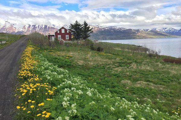 Iceland-Hrisey-Spring.jpg