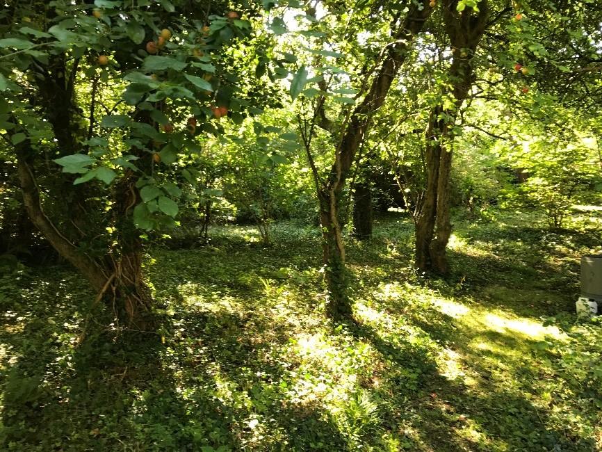 Remnant Orchard.jpg