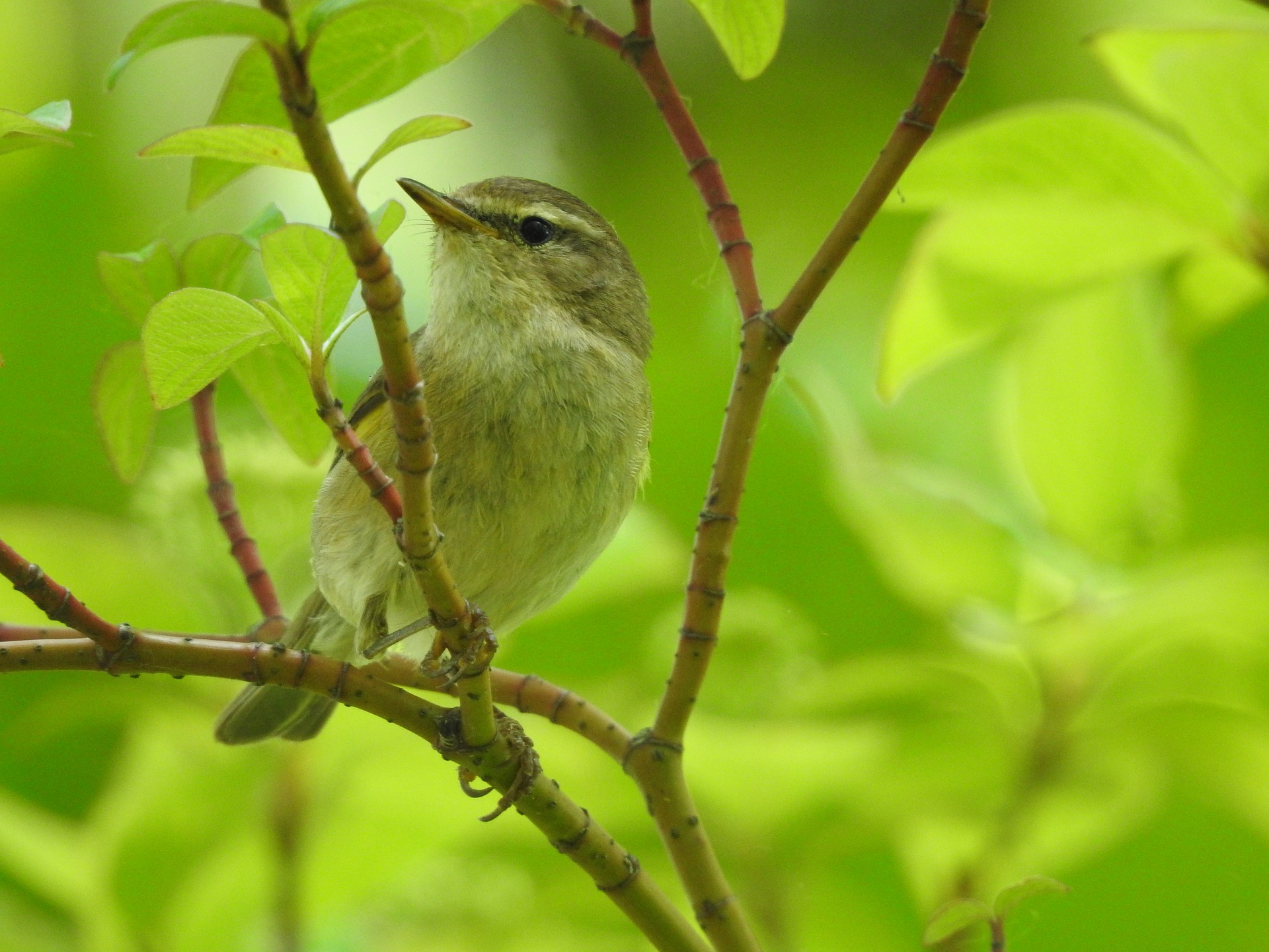 Biodiversity Net Gain warbler.jpg