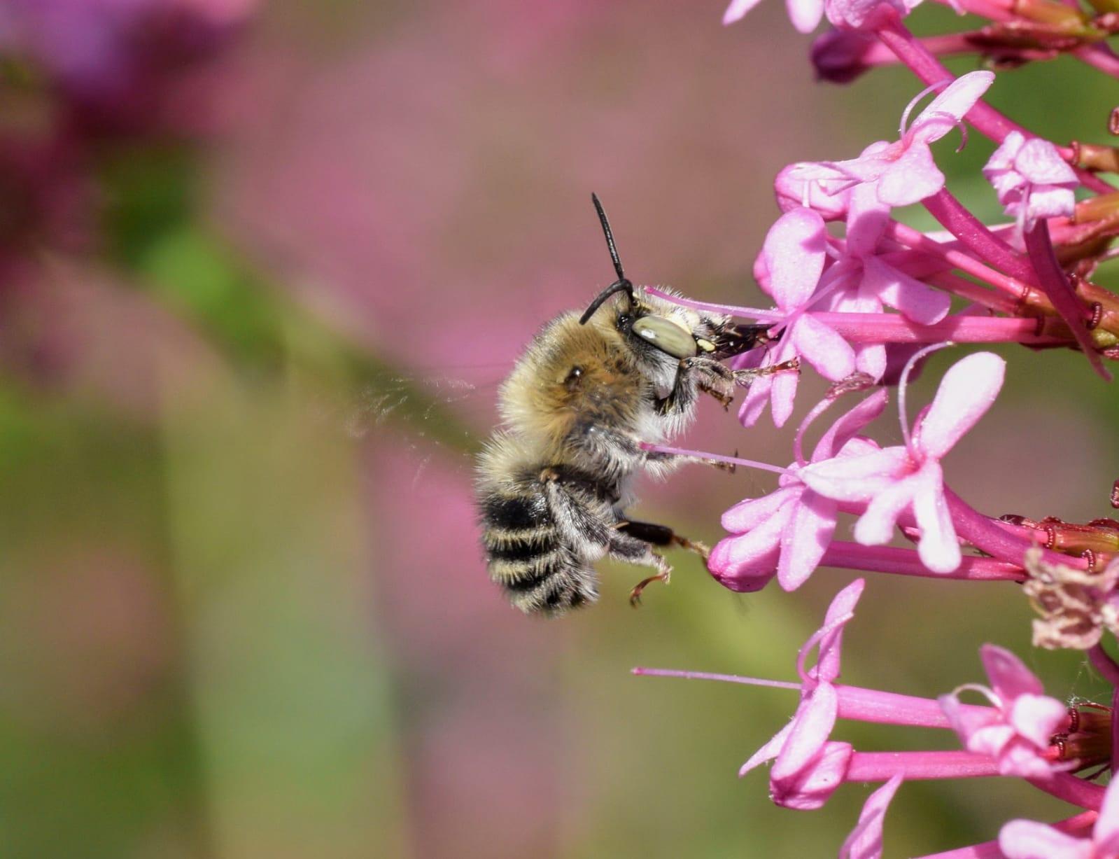 Biodiversity Net Gain Bee