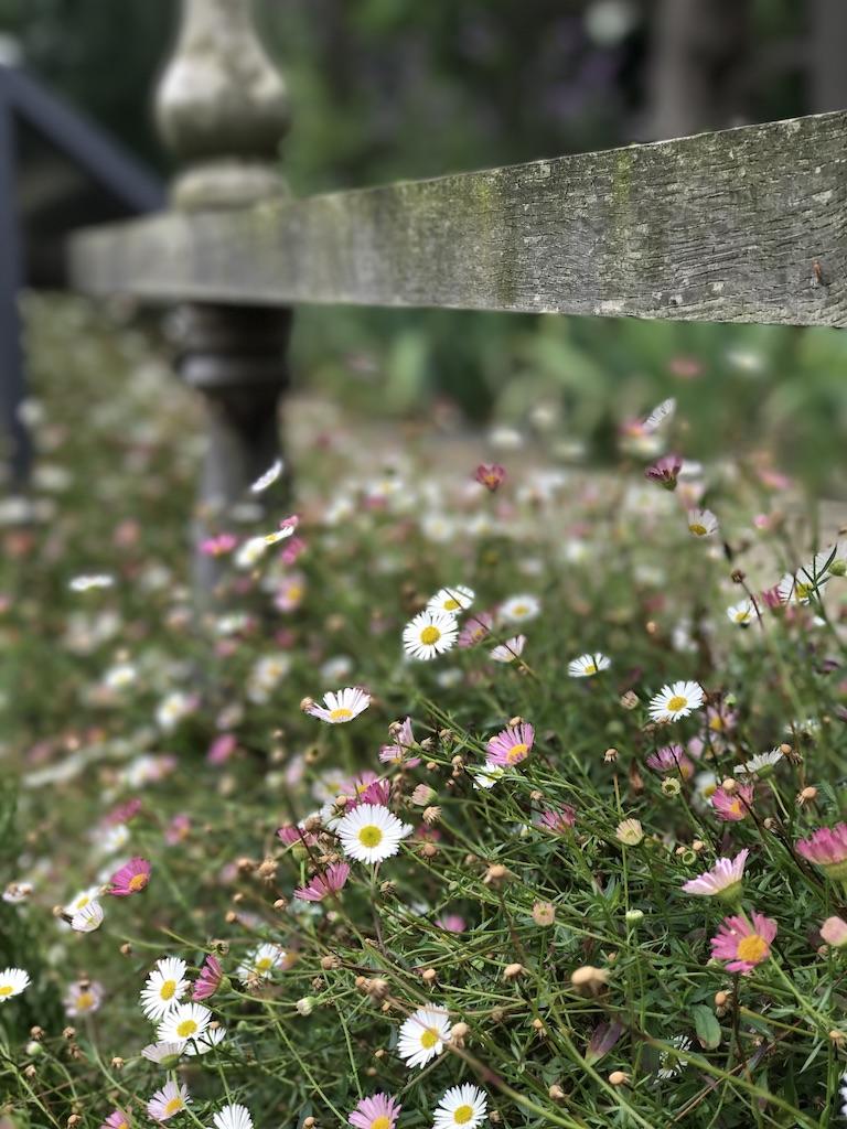 Biodiversity Net Gain Meadow flowers