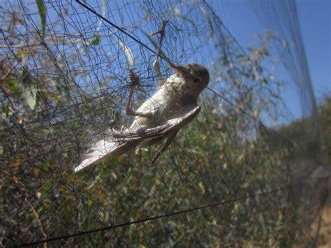 trapped bird 2.jpg