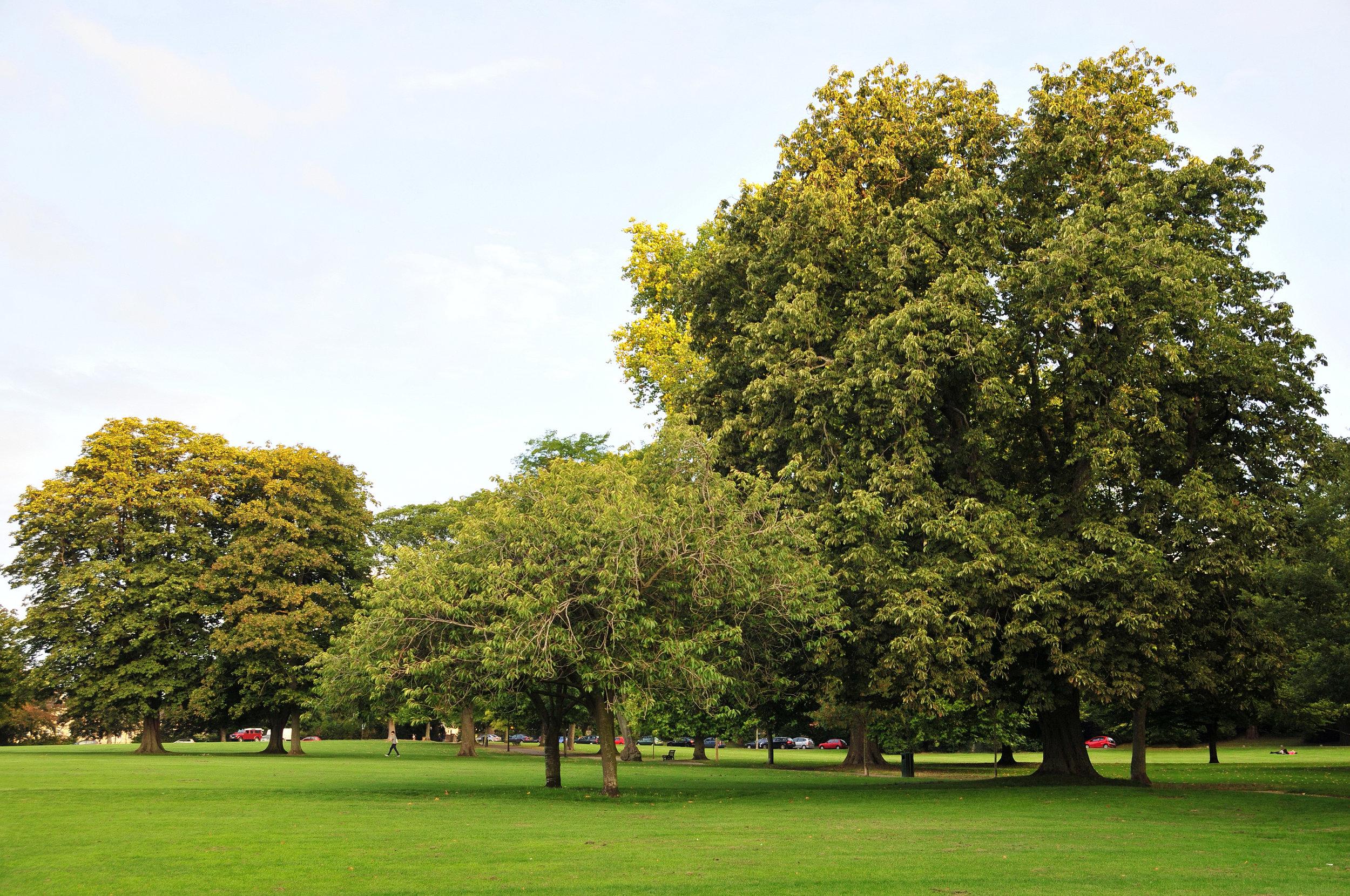 CAVAT trees.jpg