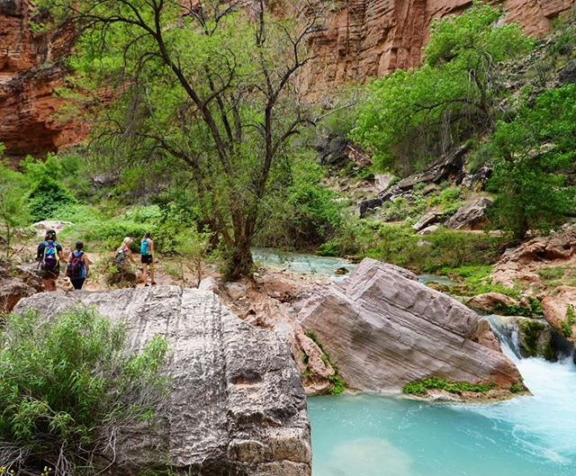Hunting for swimming holes on the way to the Colorado River confluence in the #grandcanyon #supai #femalewolfpack