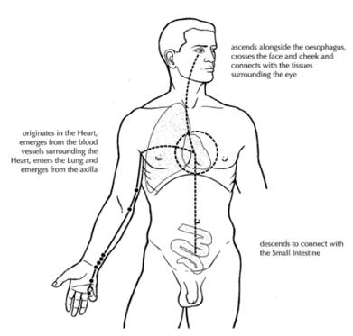 organ functioning, fire element