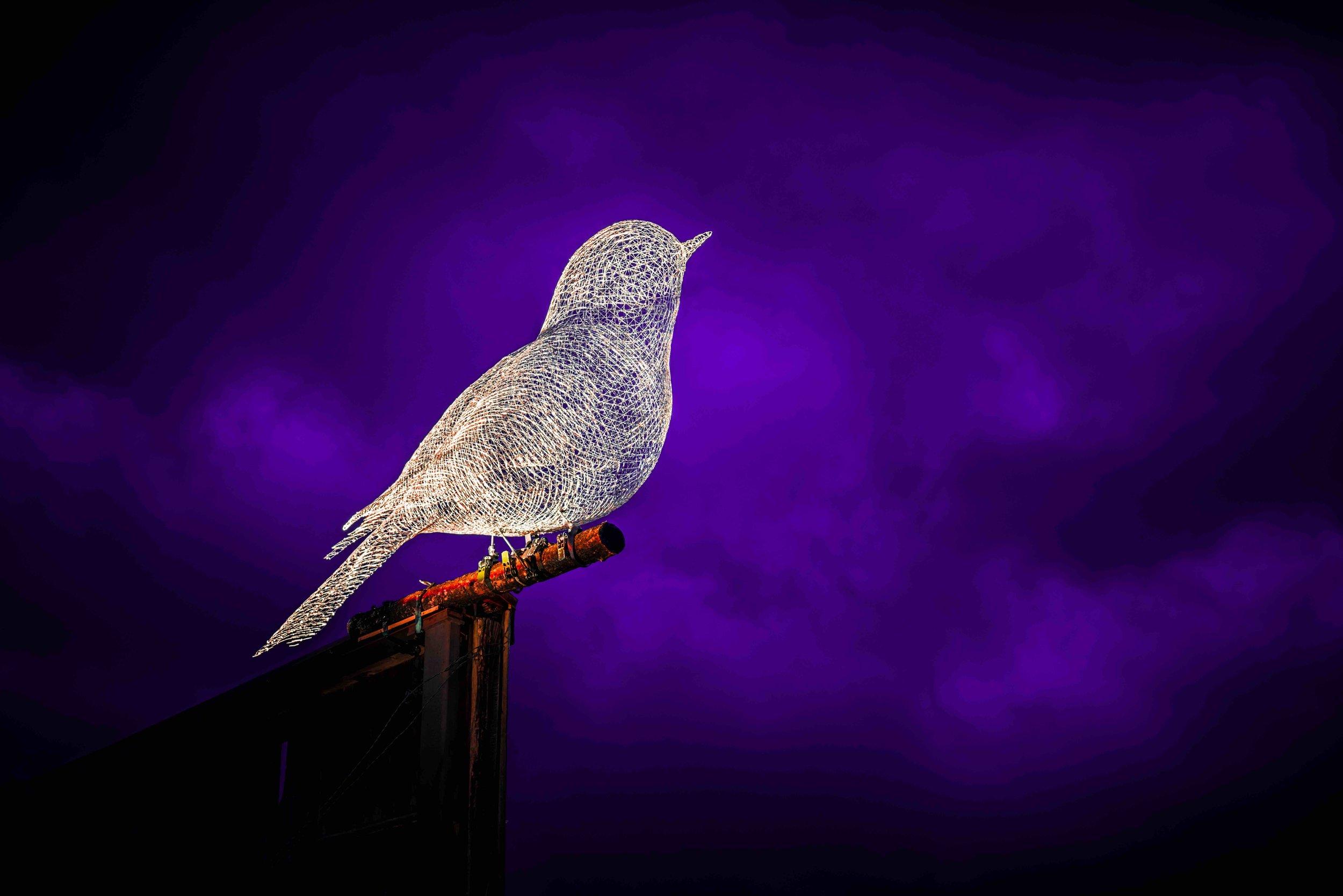 Les Oiseaux - By Cédric Le Borgne | Breckenridge 2019