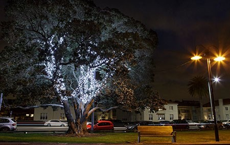 LIGHTING  Mission Bay is well known for its beautiful decorative lighting and with the assistance of the Orakei Local Board, we installed lights in four of our trees. Not only do these provide extra security at night, but they are a great night time feature on the reserve, bookmarking the entrances to Mission Bay.
