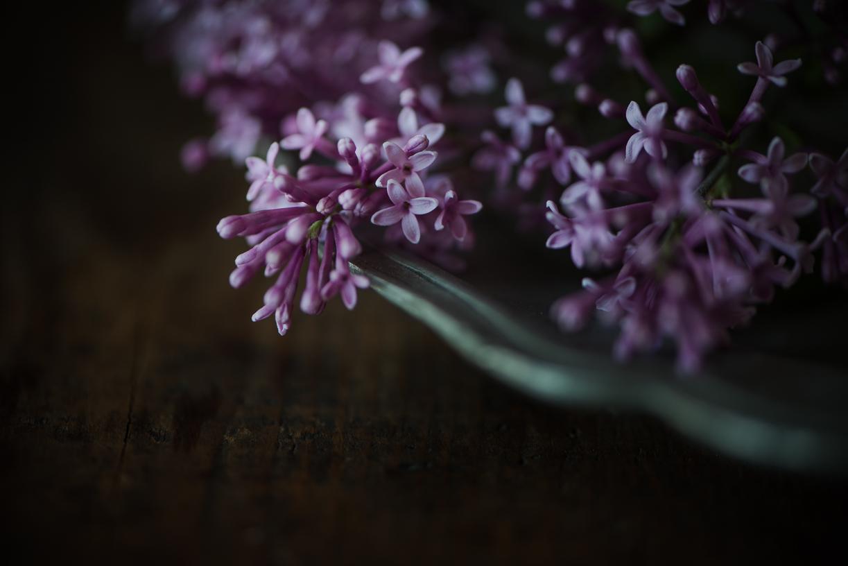 Lilacs-2.jpg