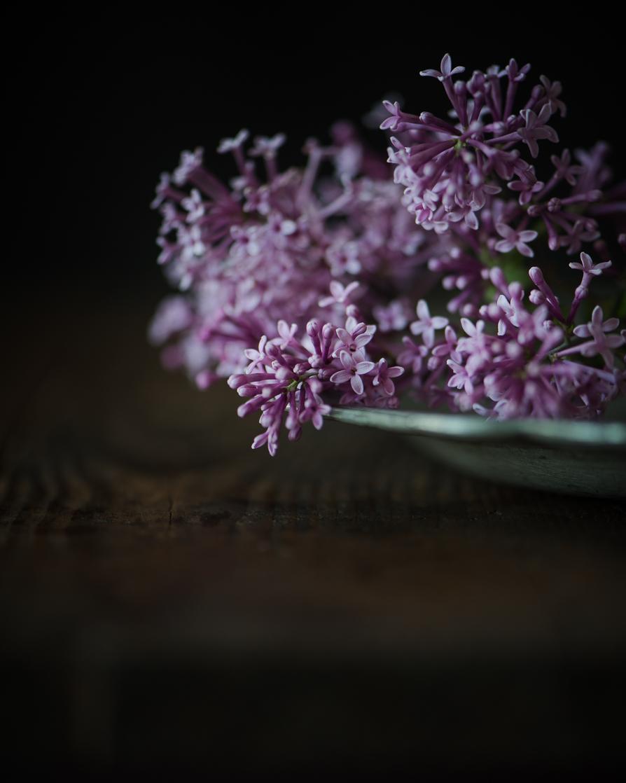 Lilacs-3.jpg