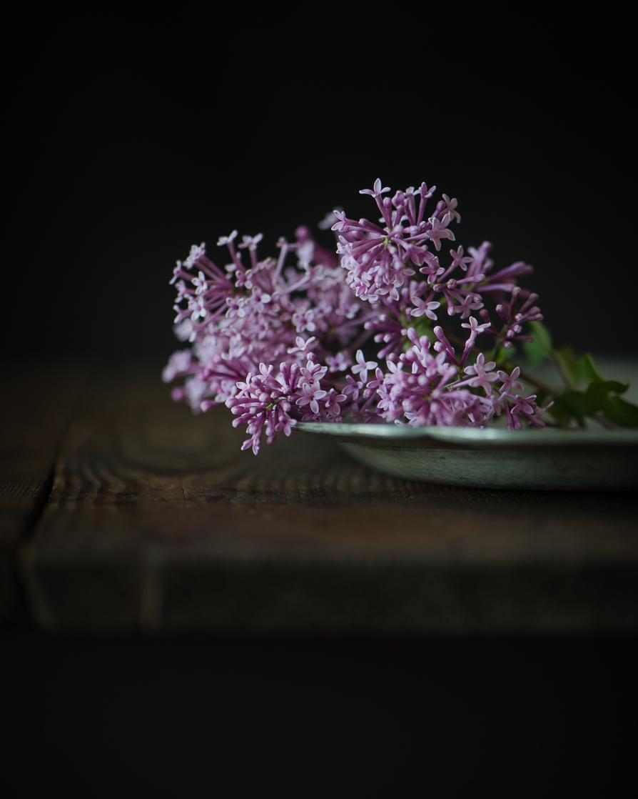 Lilacs-4.jpg