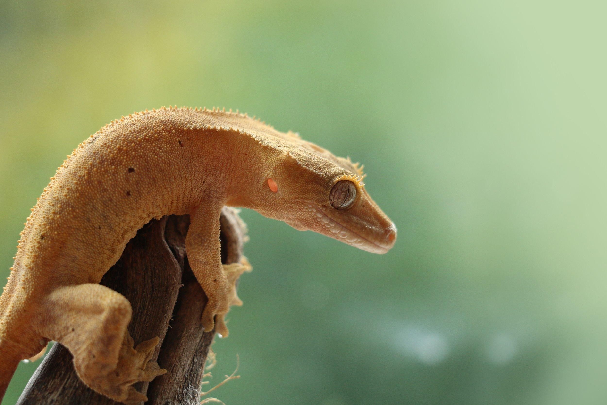 Redding Reptiles