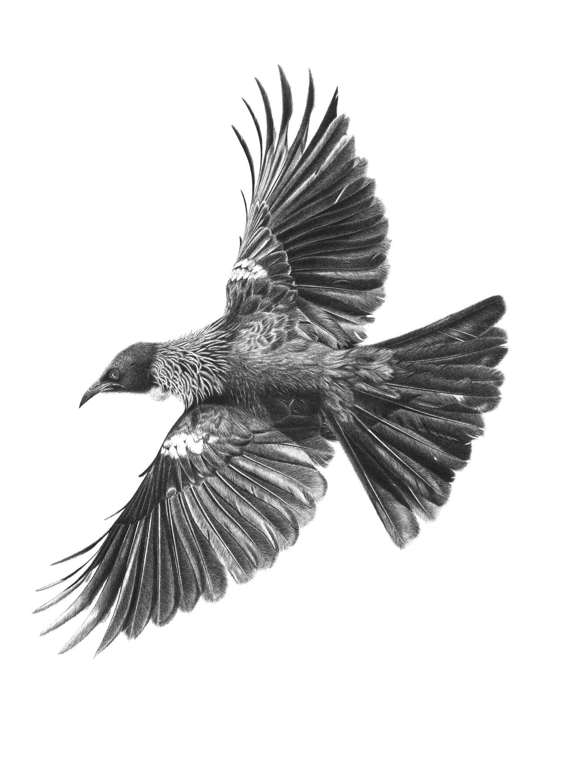 Tui Artwork Flying free.jpg