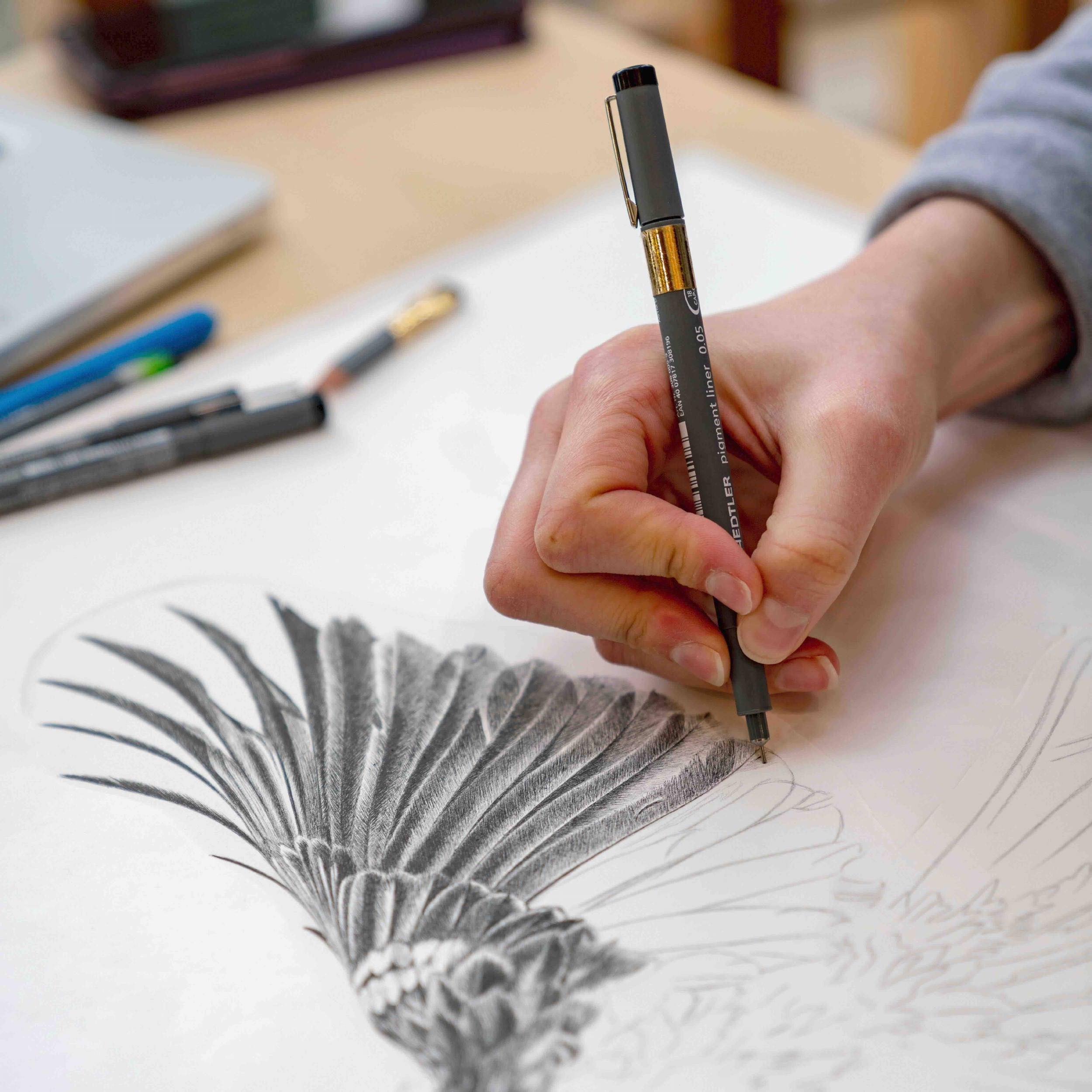 Hannah draws Tui wing. Photographed by  Judi Lapsley Miller .