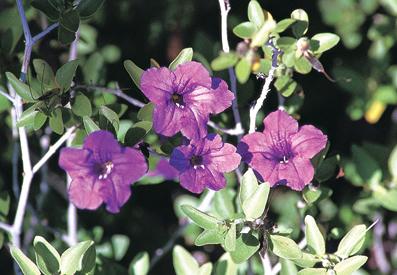 10Dsmall-shrubs.jpg