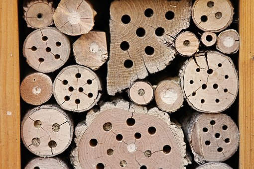 insect-hotel-2643713__340.jpg