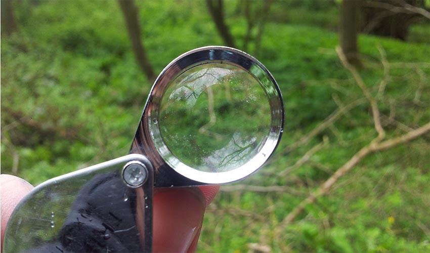 How-to-Use-a-Hand-Lens-main.jpg
