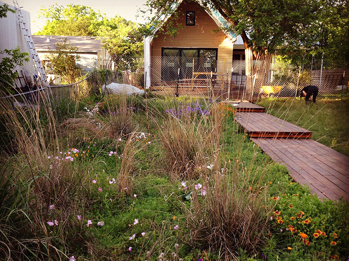 """Big muhly grass ( Muhlenbergia lindheimeri ) and little bluestem ( Schizachyrium scoparium ) intermingle with wildflowers in a """"pocket prairie"""" at the East Austin home of John Hart Asher, a Wildflower Center environmental designer. These plants are also native to Arizona. PHOTO John Hart Asher"""