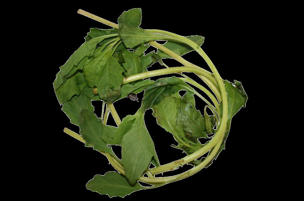 apazote_fresh_herb__17983.1421277393.1280.1280.png