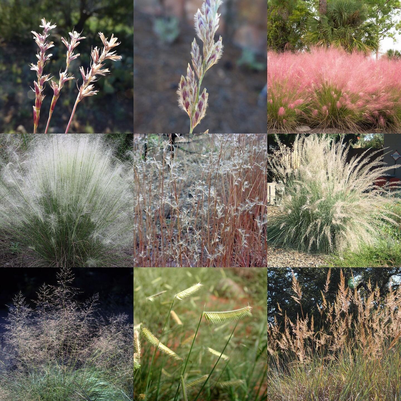 native grasses.jpg