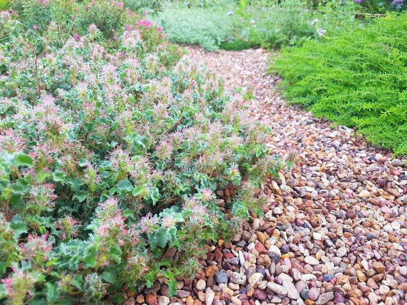 Perennial Selection Guide A B Spadefoot Nursery