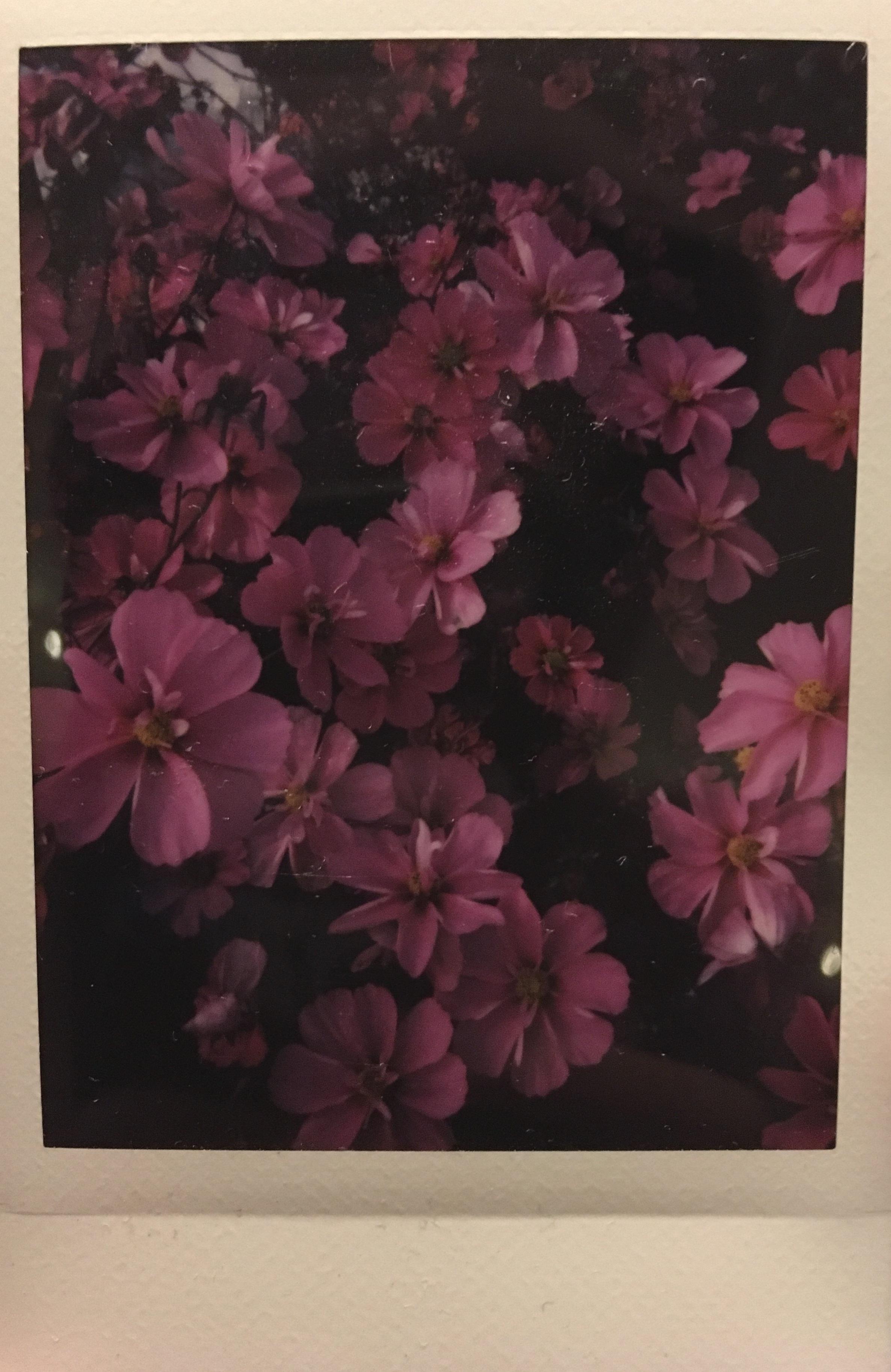 uniform flower