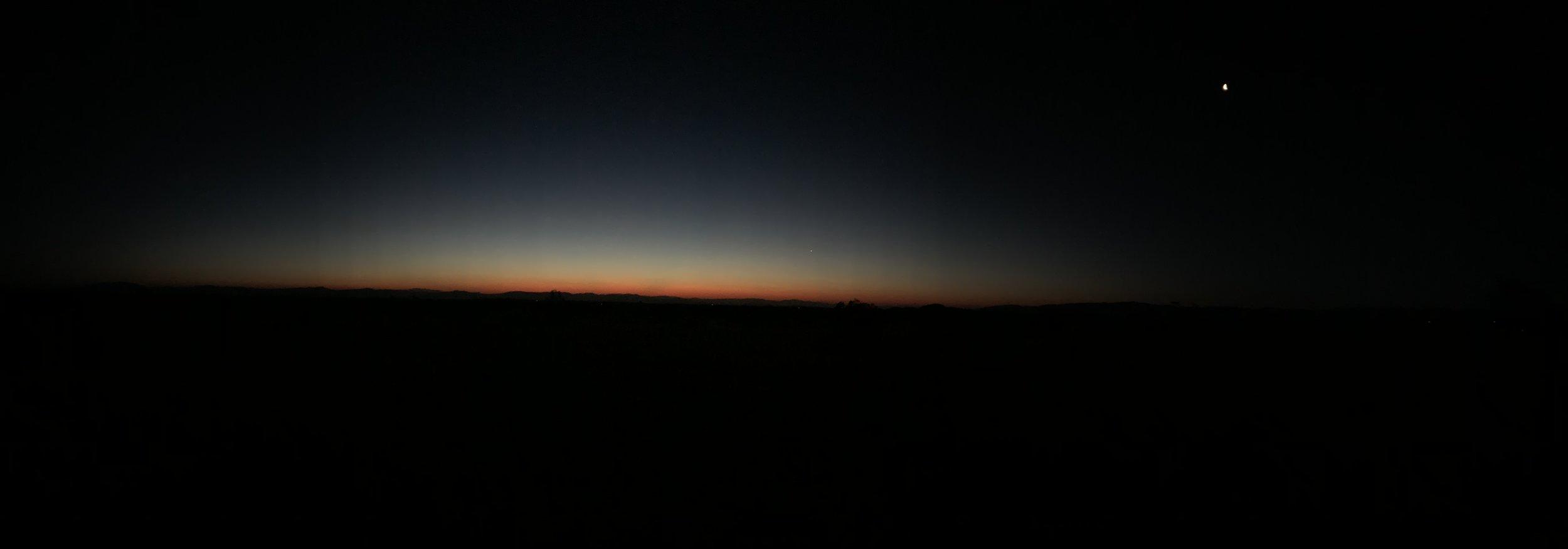 Joshua Tree at dawn