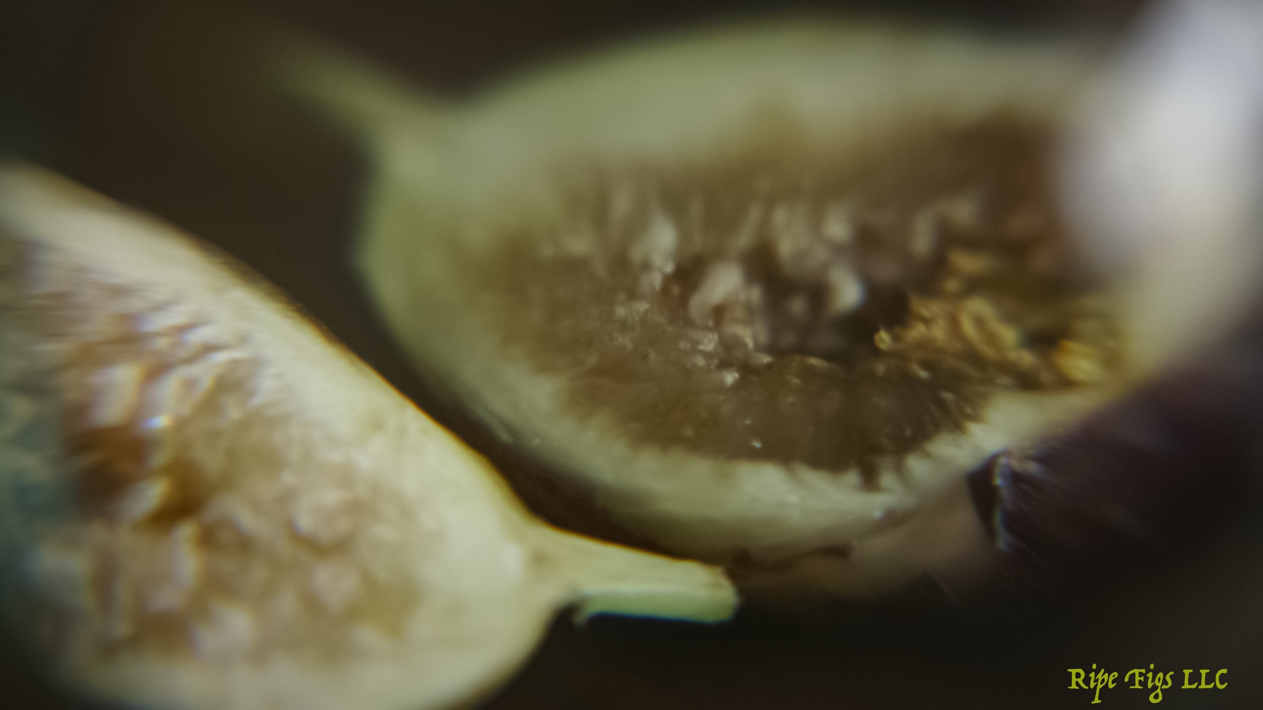 figs (9 of 9).jpg